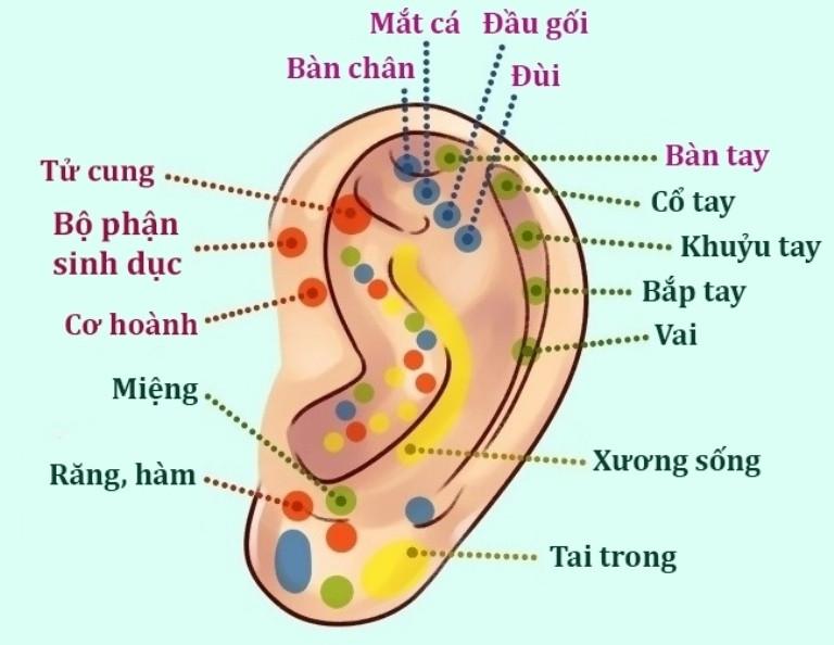 Sự thật thú vị về đôi tai hầu hết mọi người không biết