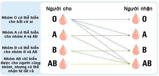 Tại sao AB lại là một trong những nhóm máu hiếm nhất thế giới?