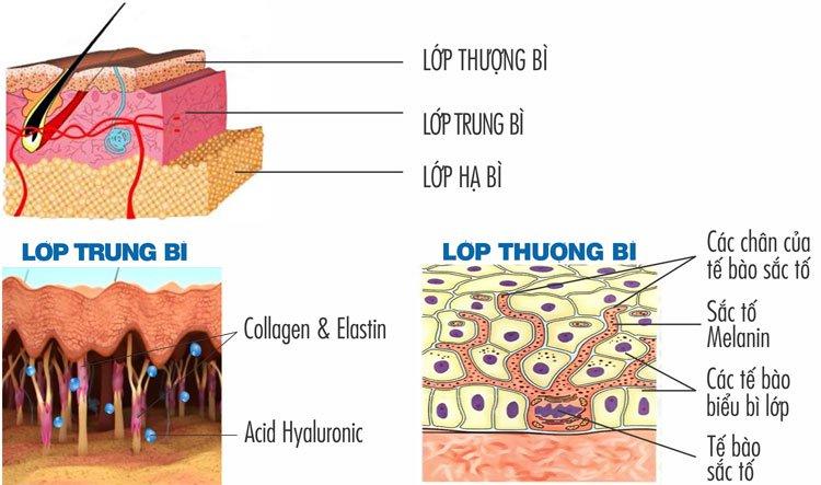 Tại sao da môi lại không giống với các vùng da khác?