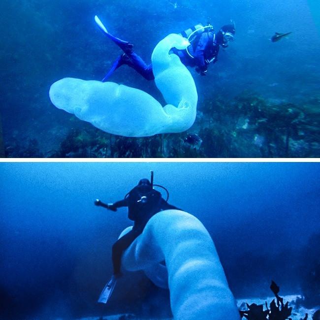 Tận mắt xem loài giun khổng lồ mà cá mập cũng phải gọi là sư phụ