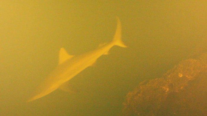 Thám hiểm loài cá mập bí ẩn sống trong miệng núi lửa