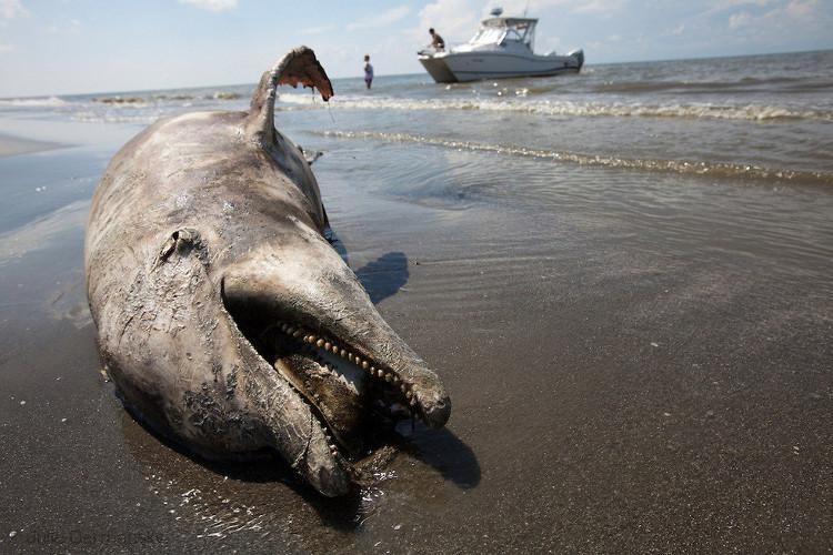 Thảm họa dầu loang trên biển sẽ chấm dứt nhờ phát minh này