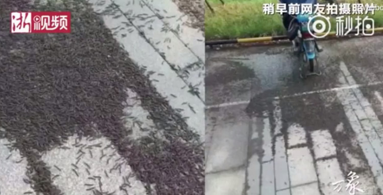 Thảm sâu cuốn chiếu dài 200m phủ đen kịt ga tàu Trung Quốc