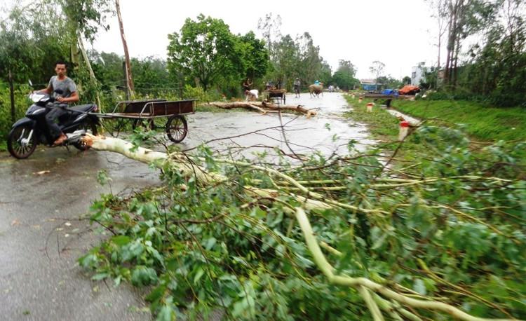 Tháng 8, Việt Nam phải hứng chịu bao nhiêu cơn bão?