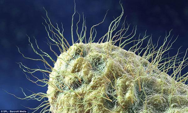 """Thế giới """"kì thú"""" của vi khuẩn trong cơ thể người"""
