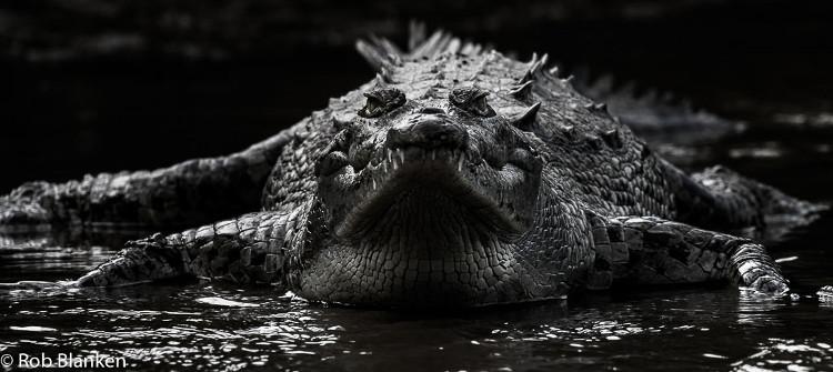 Thức ăn chăn nuôi làm đổi giới tính cá sấu?