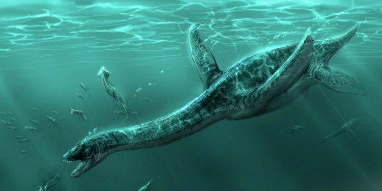 Thủy quái khổng lồ nhất dưới biển Scotland: Xơi tái 7 con cá voi cùng lúc