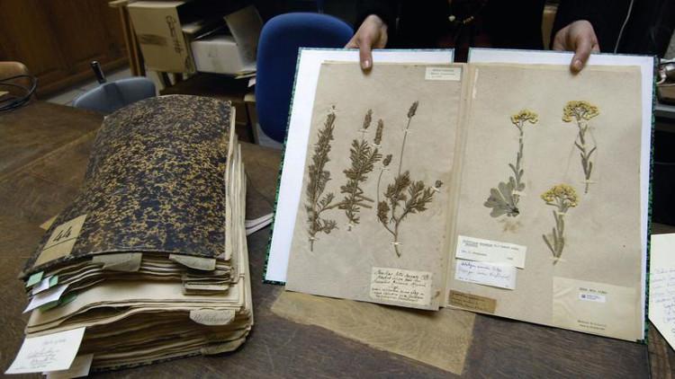 Tiêu bản thực vật 230 năm tuổi của Pháp bị hải quan Australia thiêu hủy