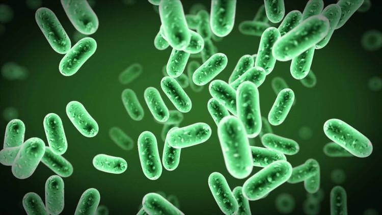Tìm ra cơ chế tiến hóa của nhiều vi khuẩn nguy hiểm chết người