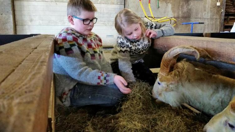 Tìm thấy cừu một sừng giống kỳ lân trong truyền thuyết