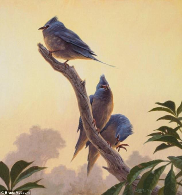 Tìm thấy hóa thạch chim cổ sau thời khủng long tuyệt chủng