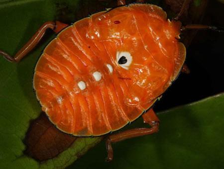 Tìm thấy nhiều loài động vật kỳ lạ tại núi lửa Bosavi
