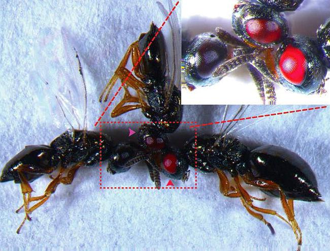 Tin được không: Khoa học tạo ra những con ong đến từ địa ngục và bước chuyển mình quan trọng của công nghệ gene