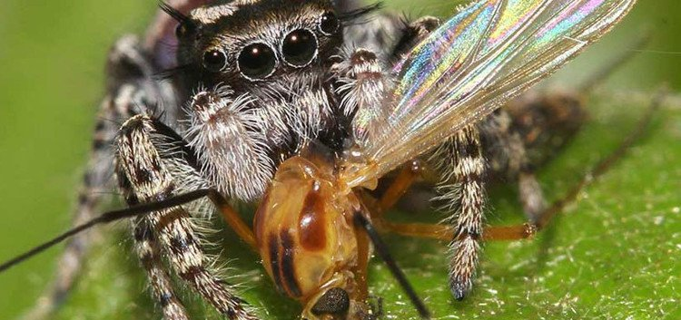 Toàn bộ cân nặng con người cộng lại không bằng số thức ăn mà nhện tiêu thụ mỗi năm