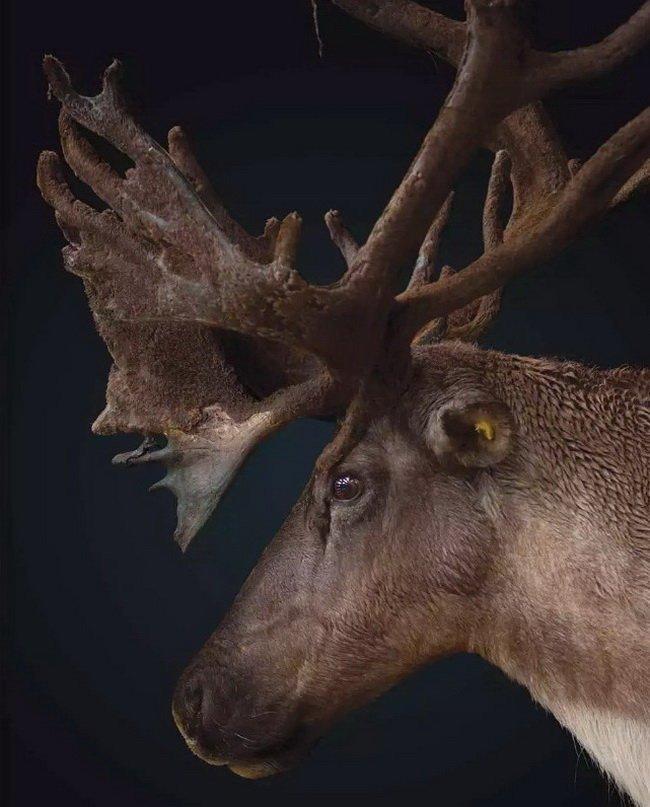Top 8 loài vật đang bên bờ vực tuyệt chủng