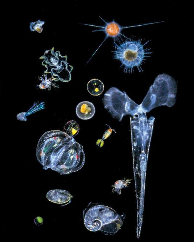 Trạm không gian NASA sử dụng Laser thăm dò đại dương