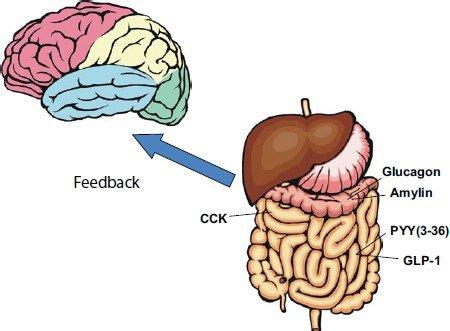 Trí nhớ của hệ thống tiêu hóa giúp chúng ta nhớ rõ nơi mình từng được ăn ngon