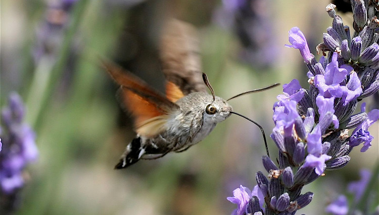 Trố mắt những côn trùng kì quái tồn tại trên Trái đất