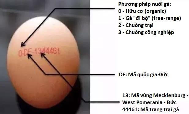 Trứng gà cũng có chứng minh thư, bạn biết không?