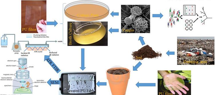 Trung Quốc phát hiện loại nấm có khả năng tiêu hóa nhựa dẻo