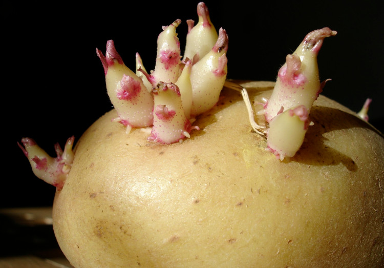 Trung Quốc sắp trồng khoai tây, nuôi sâu trên Mặt Trăng?