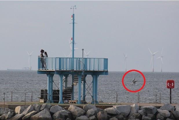 Vạch trần sự thật đằng sau bức ảnh thủy quái há mồm bên bờ biển