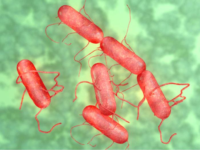 Vi khuẩn gây ngộ độc thực phẩm diệt được khối u não