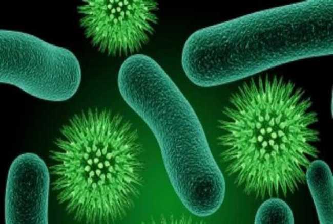 Vi khuẩn hóa ra cũng biết nói chuyện