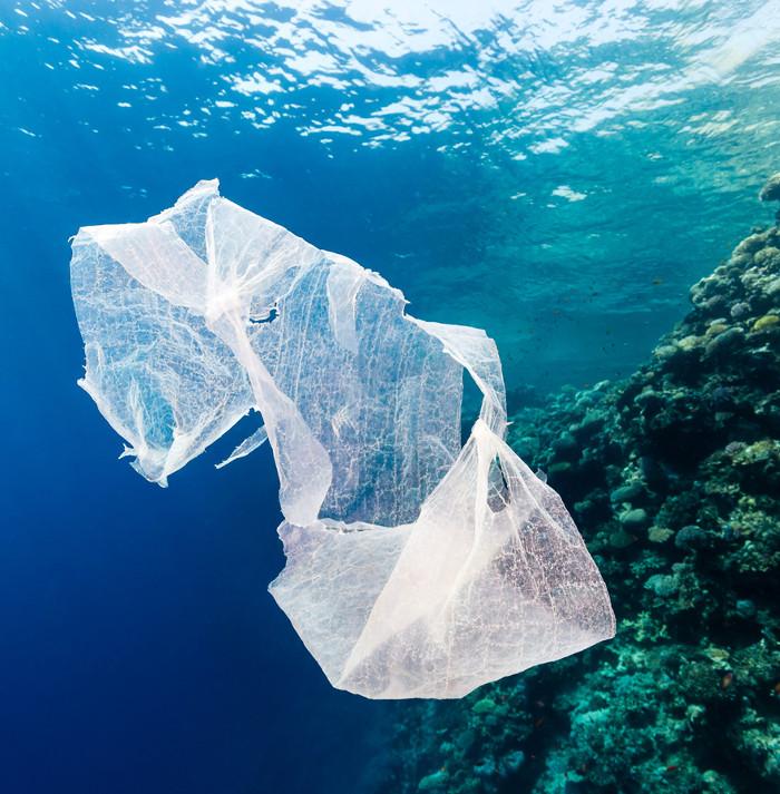 """Vi khuẩn tiến hóa có thể """"ăn"""" nhựa làm ô nhiễm đại dương"""