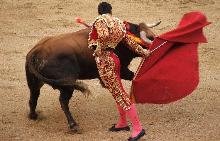 Vì sao bò tót nổi điên với màu đỏ?