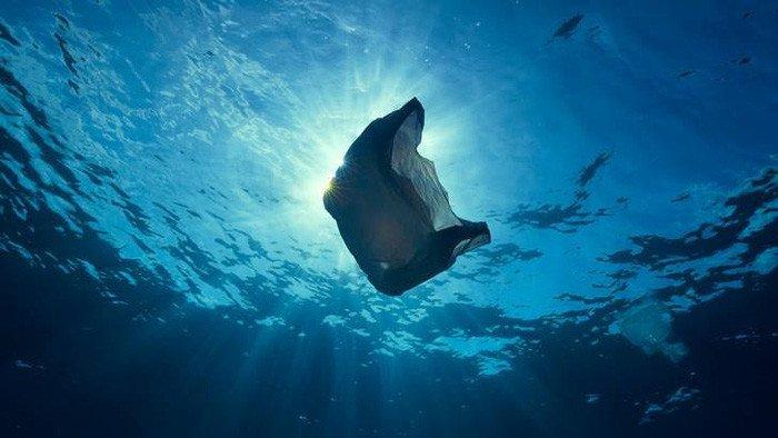 Vì sao động vật biển không thể ngừng ăn rác nhựa?
