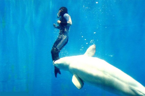 Vì sao loài vật lại cứu người?