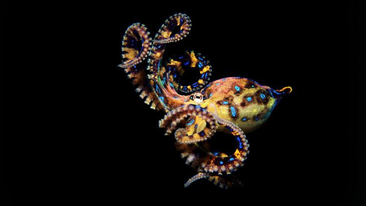 Vì sao máu bạch tuộc có màu xanh?