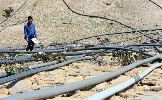 Vì sao tỉnh Ninh Thuận có mưa ít nhất nước?