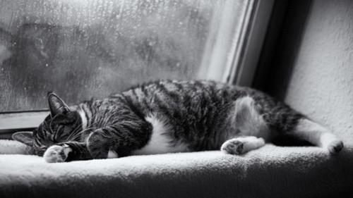 Vì sao trời mưa lại khiến chúng ta buồn ngủ?