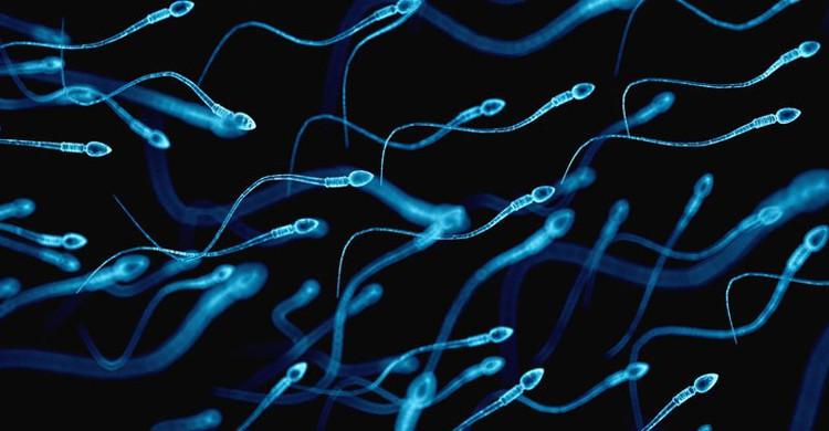 Video: 300 triệu tinh trùng bơi đua đến gặp trứng dưới góc nhìn hài hước
