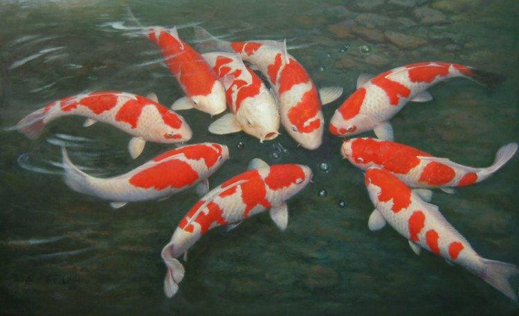 Video: Cách người Nhật đỡ đẻ cho cá chép Koi