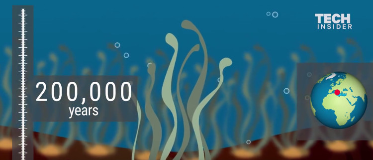 Video: Những dạng sống lâu đời nhất trên Trái Đất