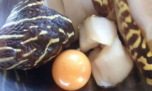Viên ngọc to bằng đồng xu trong bụng ốc xà cừ ở Trung Quốc