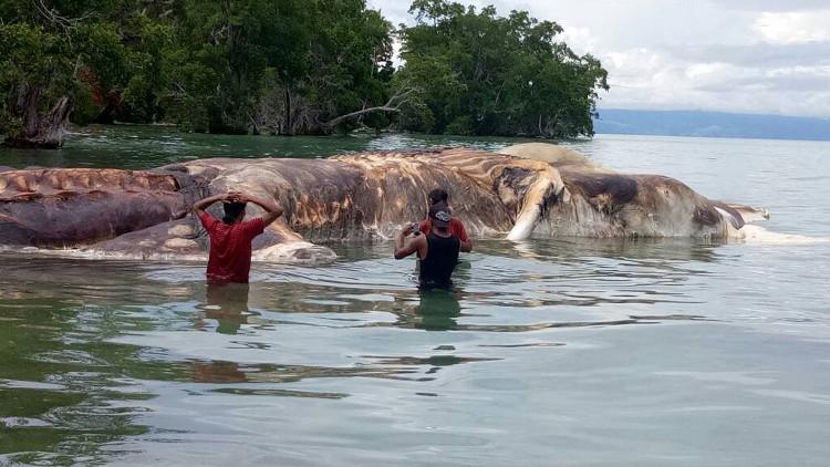 Xác quái vật khổng lồ gây hoang mang ở Indonesia