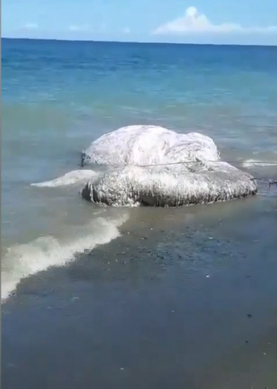 Xác sinh vật lông lá dài 6 mét dạt vào bờ biển Philippines