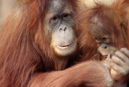 10 bà mẹ tuyệt vời trong thế giới động vật