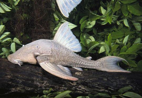 10 loài động vật mới kỳ dị nhất năm 2010