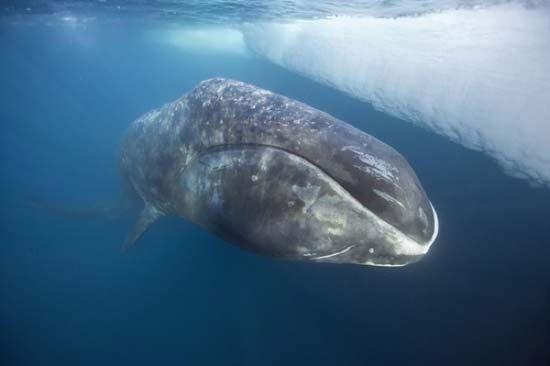 10 loài động vật sống lâu nhất quả đất