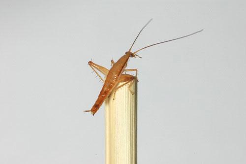 10 loài sinh vật mới phát hiện độc đáo nhất năm 2010