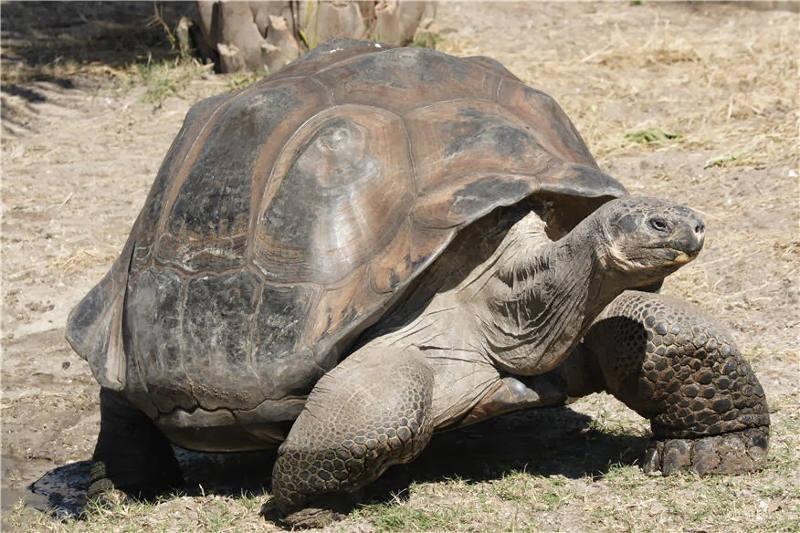 10 loài vật di chuyển chậm nhất hành tinh