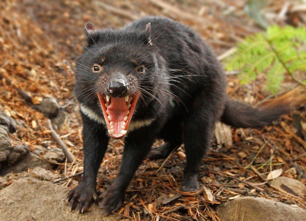 14 loài vật đáng sợ bạn có thể sẽ gặp phải tại Úc