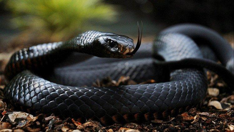 20 sinh vật nguy hiểm nhất thế giới gây chết người trong tích tắc (phần 1)