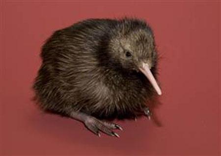 2010: Mỗi tháng có thêm một sinh vật quý hiếm