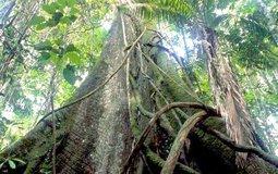 80% rừng nhiệt đới có thể biến mất do biến đổi khí hậu